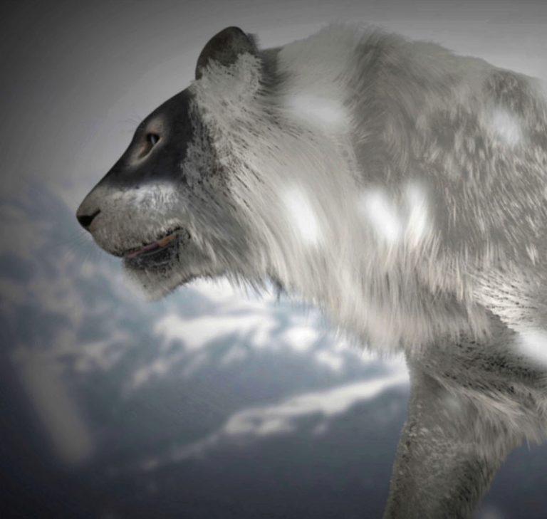 Les Géants de l'Âge de Glace – documentaires, motion design, jeu interactif